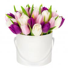 Букет 25 тюльпанів в шляпной коробці