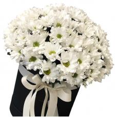 """Букет белых хризантем в коробке """"Emma"""""""