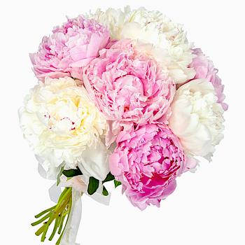 """Букет из 7 пионов """"Жозефина"""". annetflowers.com.ua. Купить букет из пионов микс"""