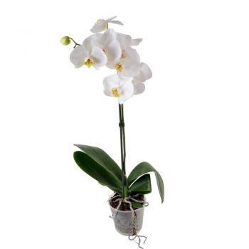 Белая Орхидея в горшке (1 ствол). annetflowers.com.ua. Купить орхидею в горшке в магазине цветов Annetflowers