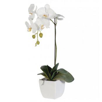 Комнатная белая Орхидея. annetflowers.com.ua. Купить комнатные цветы Орхидея белая