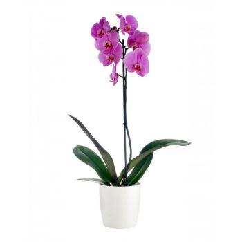 Орхидея розовая в горшке (1 ствол). annetflowers.com.ua. Заказать комнатный цветок розовой орхидеи в горшке